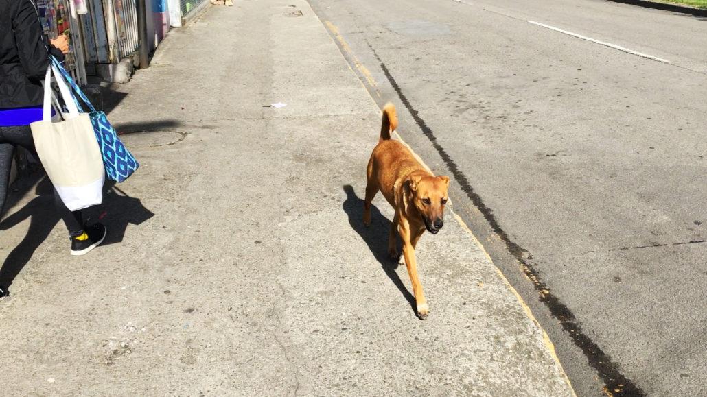 Happy Street Dog Cuenca Ecuador