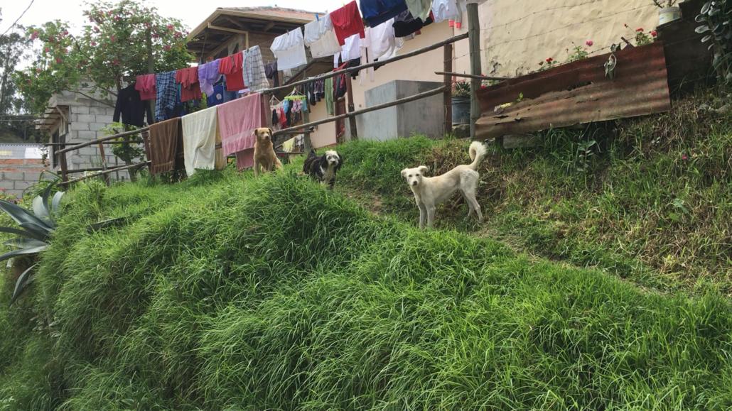Laundry Day Cuenca Ecuador