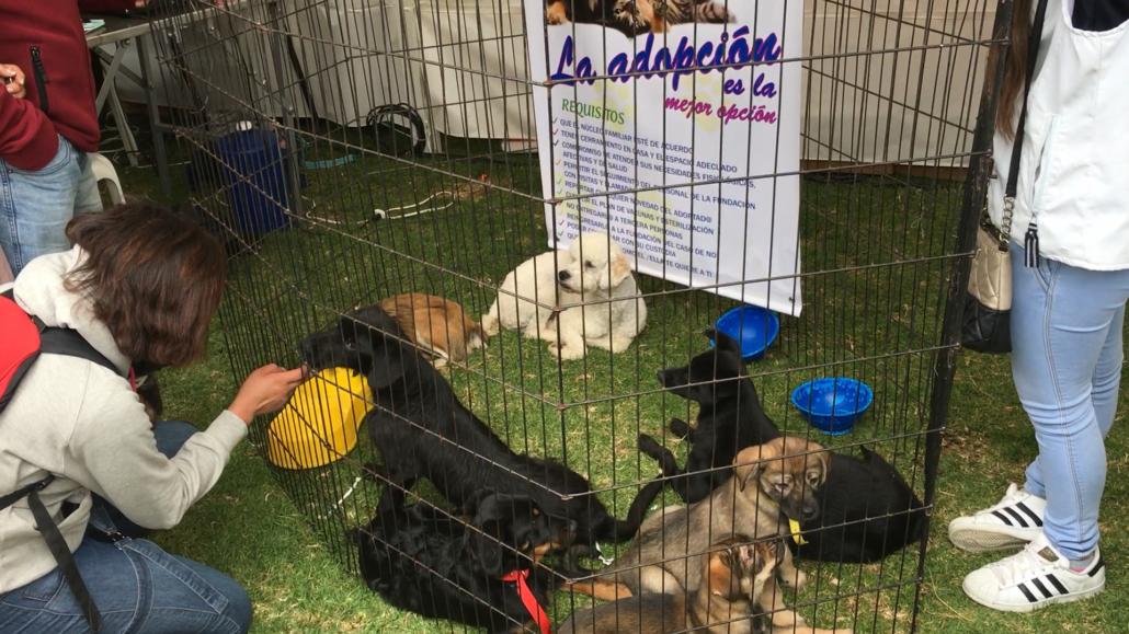 Feria Mascotas Adoption at Parque El Paraíso in Cuenca Ecuador