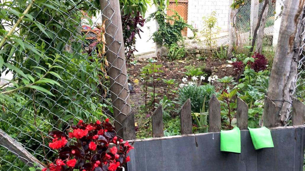 Tea Garden in San Bartolomé Ecuador