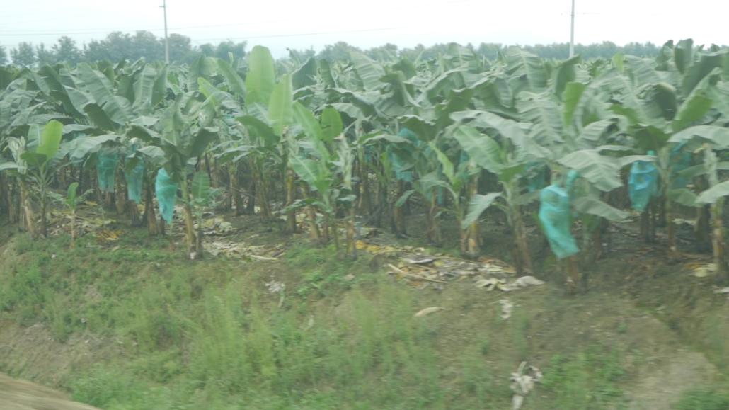 10 Cuenca to La Entrada Bananas