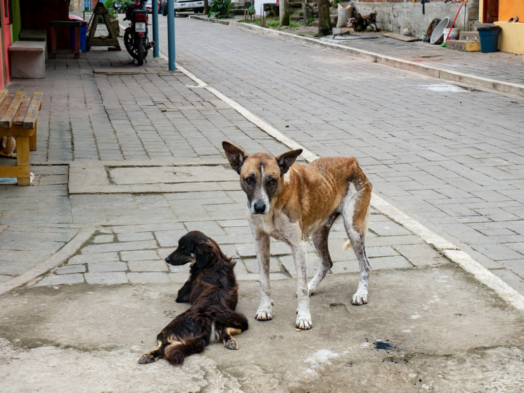 La Entrada Ecuador Skinny Dog