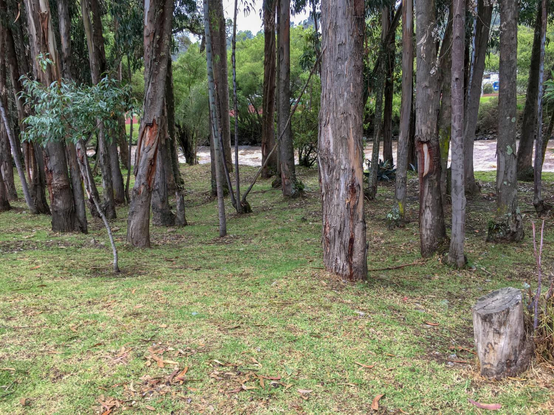 Cuenca Ecuador River Walk Trees