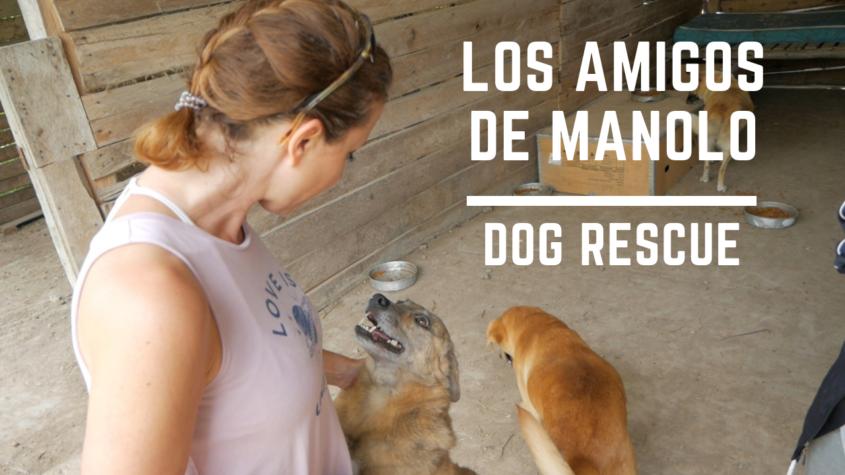 Los Amigos de Manolo Dog Rescue in Cuenca Ecuador