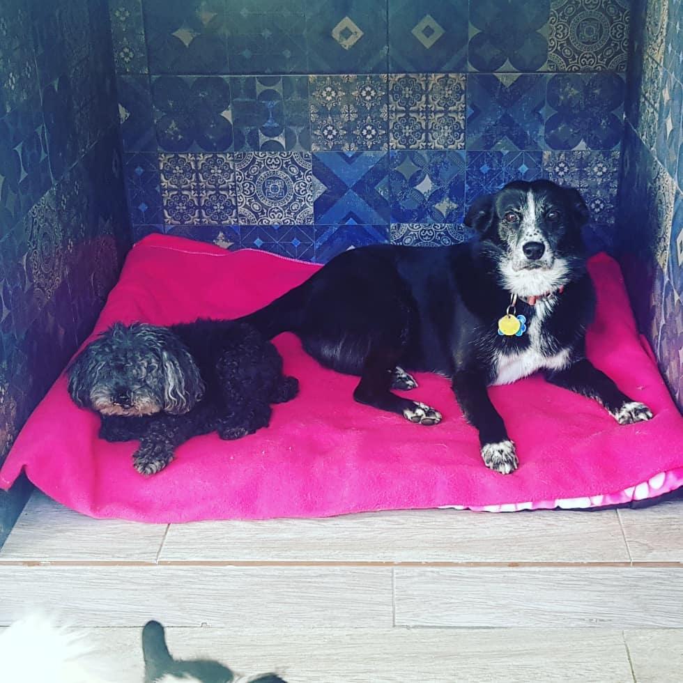 Maxi's Pet Care