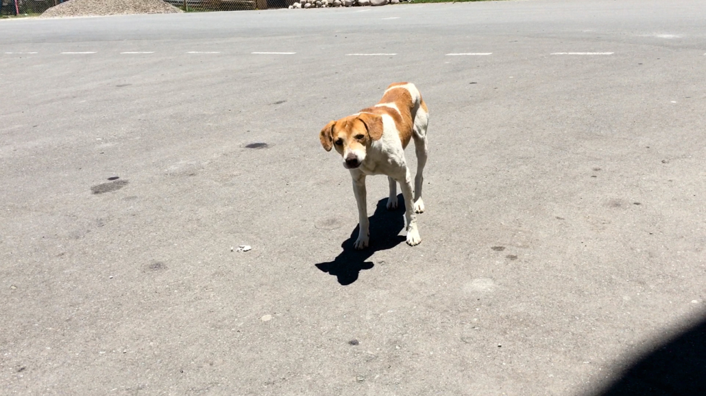 Underfed Dog
