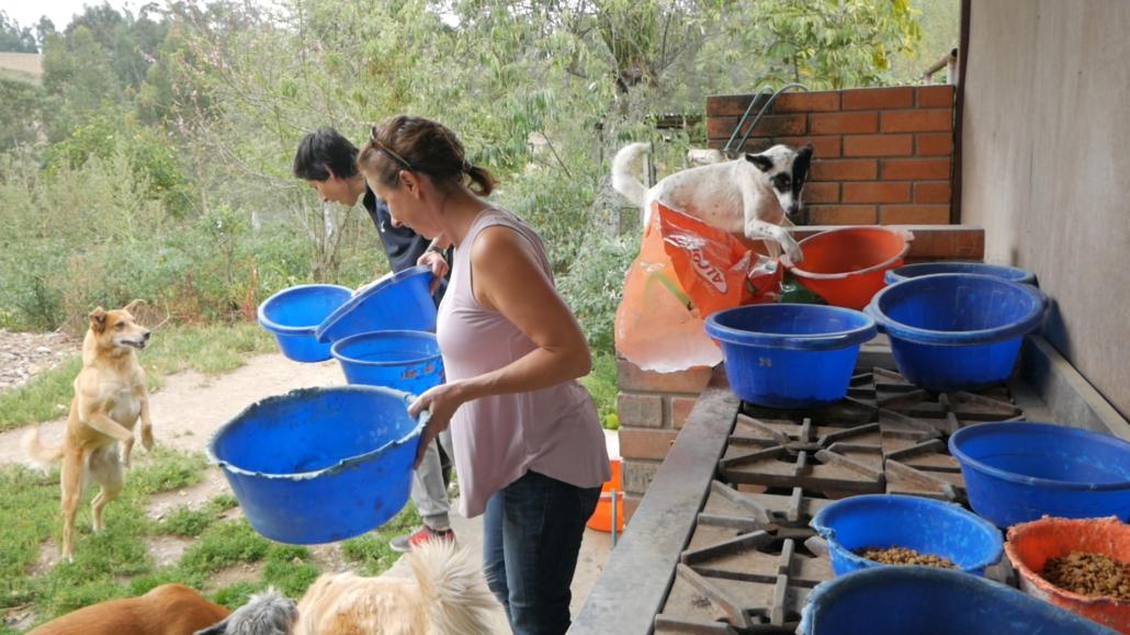 Dog Rescue Cuenca