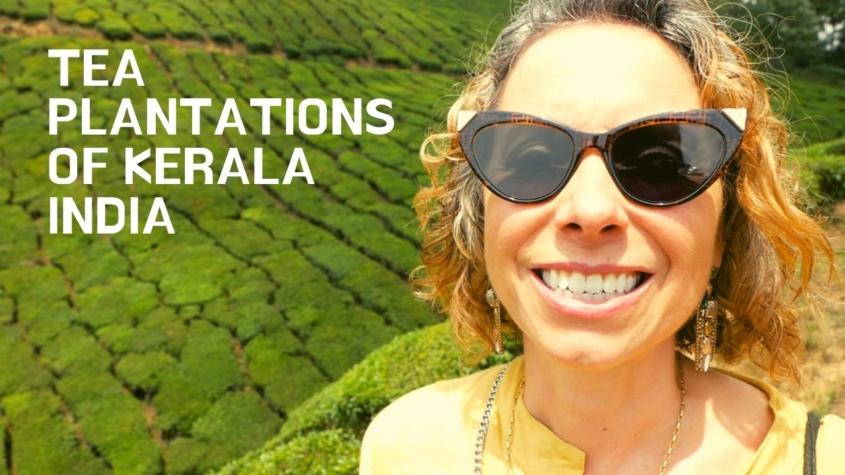 Tea Plantations of Kerala India