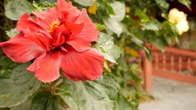 Vilcabamba Ecuador Natural Beauty Flowers